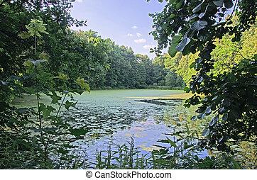 lake at summer