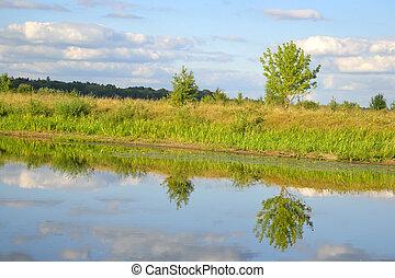 Lake at sunny day.
