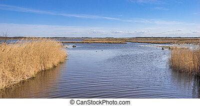 Lake at the nature reserve De Onlanden in Drenthe, Netherlands