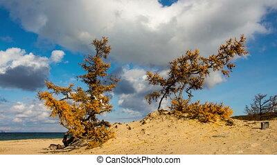 Lake Baikal beach. Siberia. Blue sky, moving clouds, sand, trees. Time lapse