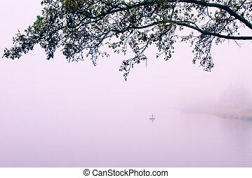 lake bank - a foggy lake on a november morning