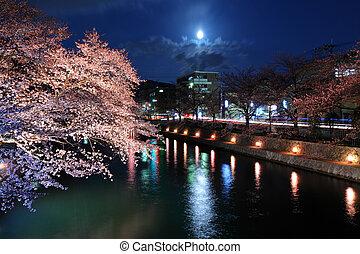 Lake biwa canal with sakura at night