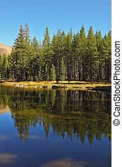 lake., bosque, reflejado