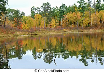 Lake Foliage Reflections In Itasca State Park - Vibrant ...