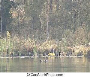 Lake forest fragment