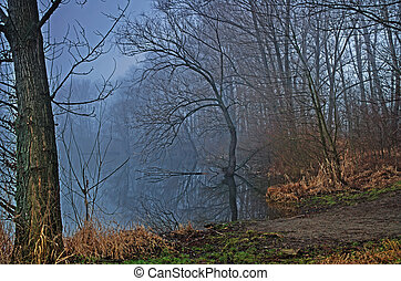 Lake forest with mist in dawn