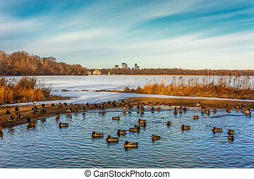Lake Harriet in Minneapolis, Minnesota with Ducks in Foreground, downtown in Background.