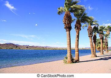 Lake Havasu landscape - Row of palm trees by lake Havasu