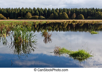 Lake in a forest in autumn