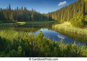 Lake in a mountain forest. Carpathian mountains