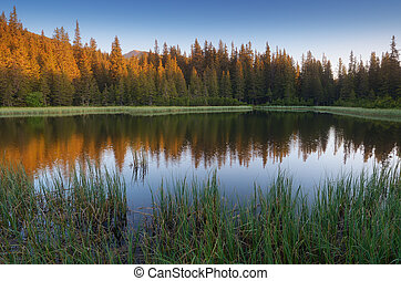 Lake in a mountain forest. Carpathians