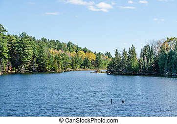 Lake in Algonquin Park