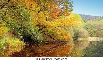 Autumn trees reflecting in the forest lake.