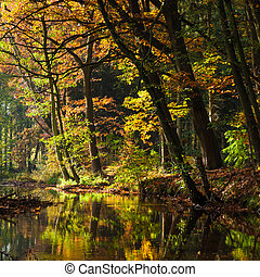 lake in deep forest  - lake in deep forest