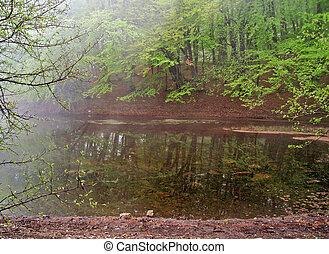 lake in mist