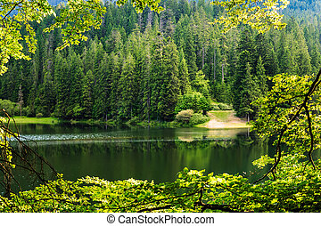 lake in pine forest