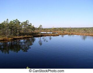 Lake in swamp