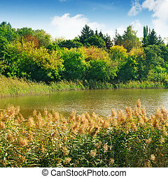 lake in the forest