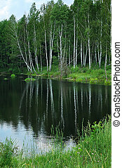 Lake in the forest.