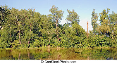 Lake in Wilanow - Summer view of the lake with trees and ...
