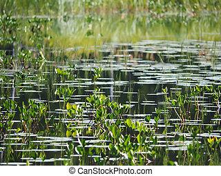 lake., karelia, 숲