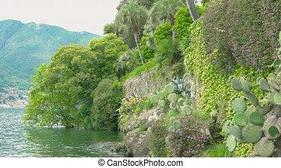 Lake Maggiore, green plants. - Lake Maggiore green plants....