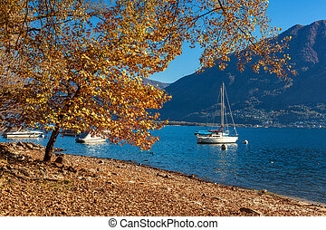 Tree with yellow leaves on lakeshore of famous Lake Maggiore with yacht on background in Locarno, Switzerland.