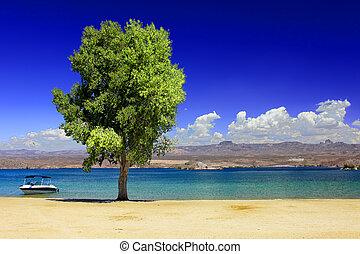 Lake Mohave Beach Nevada