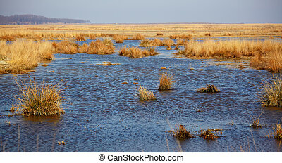 Lake nearby Vadu in Danube Delta Reserve