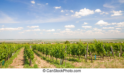 Lake Neusiedler See,Burgenland,Austria - Wine Village of...