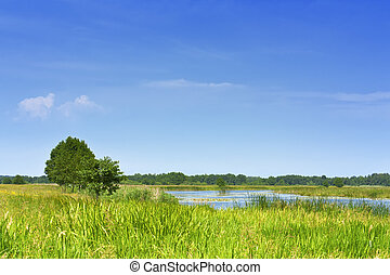 Lake on a green meadow