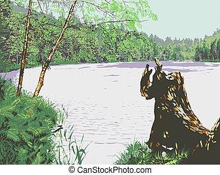 lake., paisagem., floresta, vector.