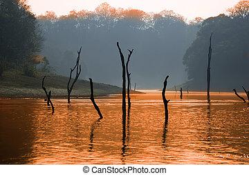 lake, Periyar National Park, Kerala, India