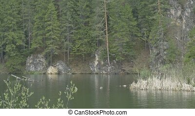 Lake, Pines and Cliffs View - Beautiful view of a mountain...