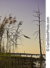 Lake Ponchartrain Coastline - The swamps of St Charles ...