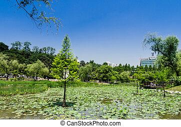 lake pond tree wetland swamp
