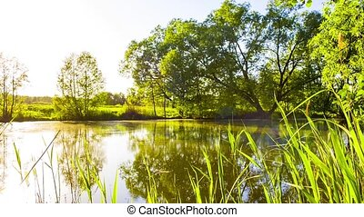Lake pond with a tree
