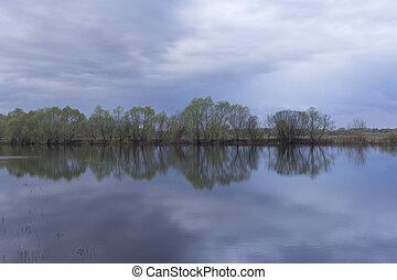 lake., réflexion arbre, bouleaux
