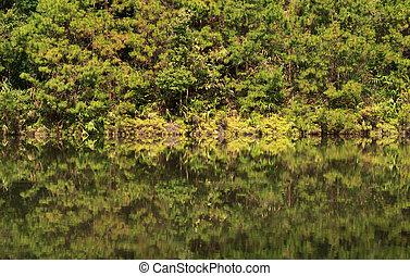 lake., réflexion arbre, pin