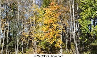 lake reflect autumn tree