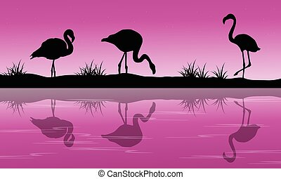 Lake scenery flamingo silhouette at sunset