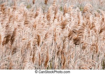 Lake Shore. Coastal plants, texture, reed, pattern. Brown color.