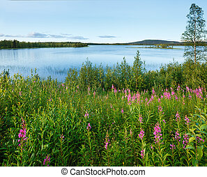 Lake summer view (Sweden). - Lake summer view with pink...