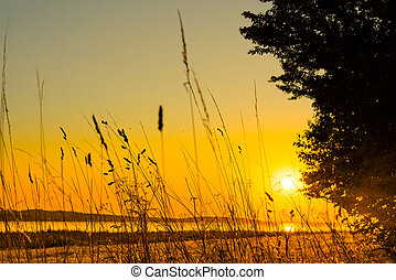 Lake sunrise with grass silhouettes