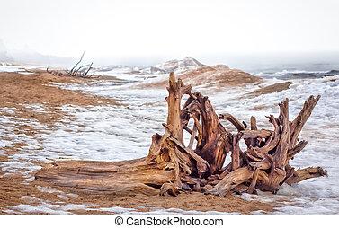 Driftwood Ashore at Minnesota Point, Lake Superior