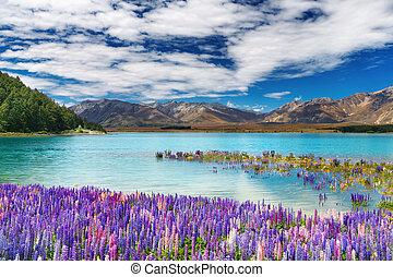 Lake Tekapo, New Zealand - Lake Tekapo, South Island, New ...