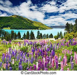 Lake Tekapo, New Zealand - Landscape with lake and flowers,...