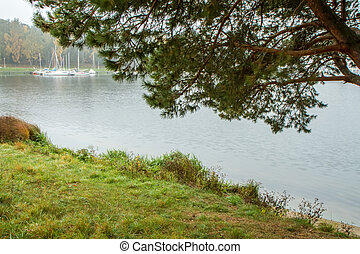 Lake through the branches of the tree - Lithuanian landscape...