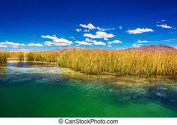 Lake Titicaca Reeds