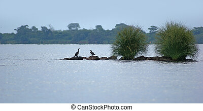 Lake Victoria near Entebbe - waterside scenery with some...